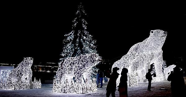 Işıklandırılan beyaz ayı ailesi beğeni topladı