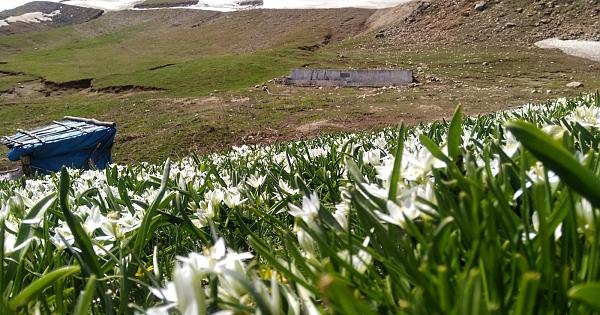 Dağ çiçekleri görsel şölen oluşturdu