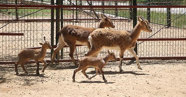 Hayvanat bahçesi nüfusu artıyor!