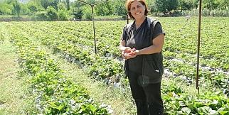 Çilek üretimine kadın eli