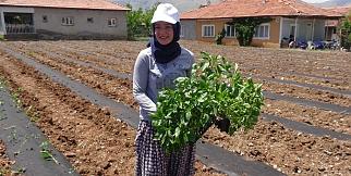 Doğanşehir'de tütünün alternatifi bulundu
