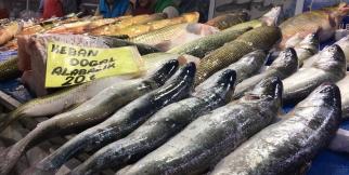 Elazığ'da balık bereketi hamsiden bile ucuz