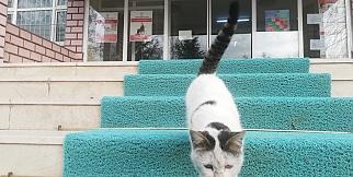 Sokak kedisi kaymakamlığın maskotu oldu