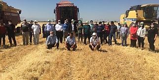 Sultansuyu TİGEM'de hasat mevsimi