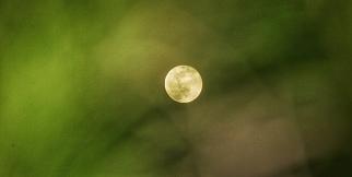 Süper Ay ağaç yapraklarının arasından böyle görüntülendi