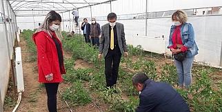 Yazıhan'da yerli mercimek ekimi!
