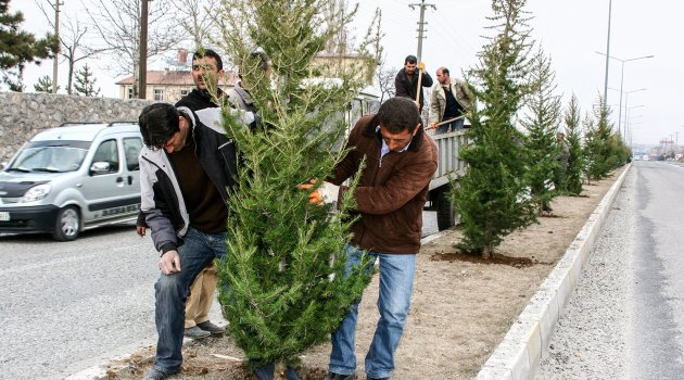 15 bin ağaç ve bitki dikimi yapıldı