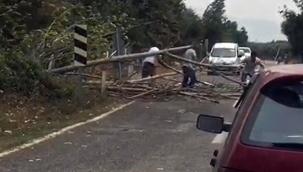 Bursa'da rüzgar ağaçları devirdi yol trafiğe kapandı