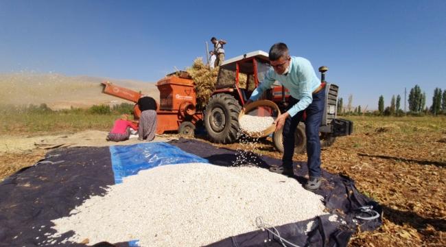 Doğanşehir'de fasulye hasadı!