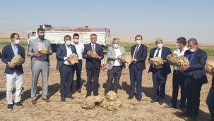 Yazıhan'da birinci kalite pancar üretimi
