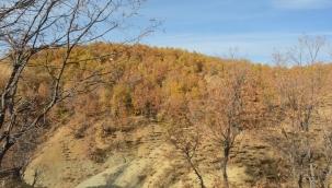 Hadino Ormanları'nda ağaç kesimi yasak