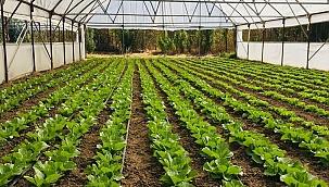 Organik Tarım Desteklemeleri!