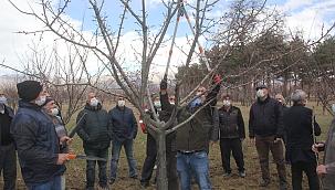 Meyve ağacı budama kursu verildi