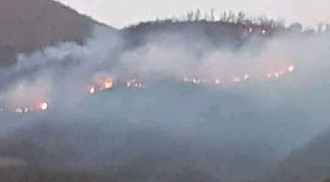 500 kestane ve meşe ağacı yandı
