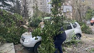 Otomobillerin üzerine ağaç devrildi