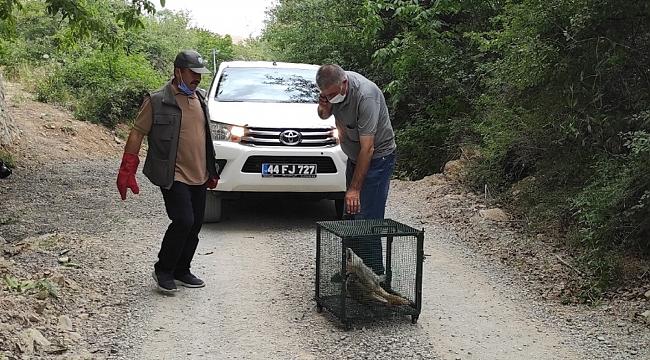 Aracın çarptığı tilki telef oldu!