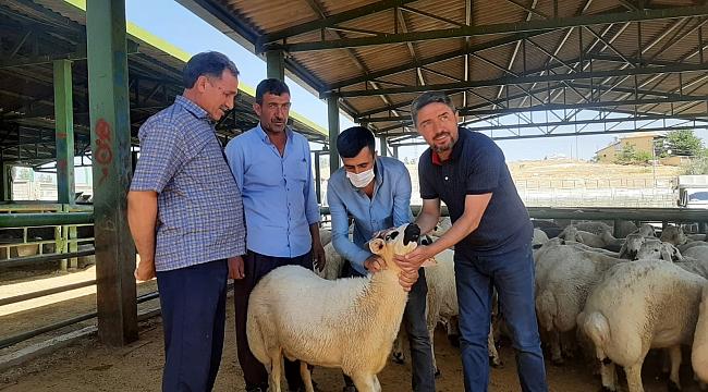 Kiraz'dan canlı hayvan pazarı ziyareti
