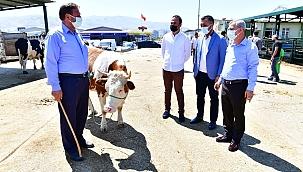 Çınar'dan canlı hayvan pazarında inceleme