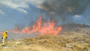 Yangın 18 dönüm araziyi küle çevirdi