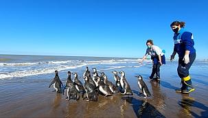 Arjantin'de 14 penguen okyanusa bırakıldı