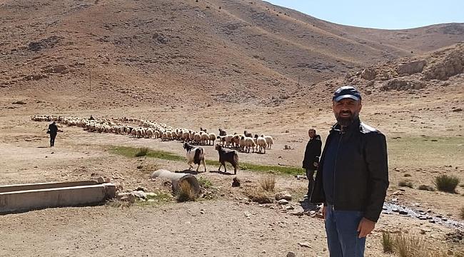 5 bin TL maaşla çoban bulunamıyor
