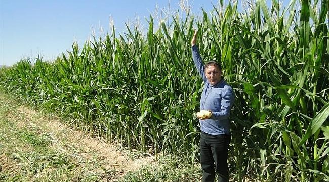 Silajlık mısır hasatta yüz güldürüyor