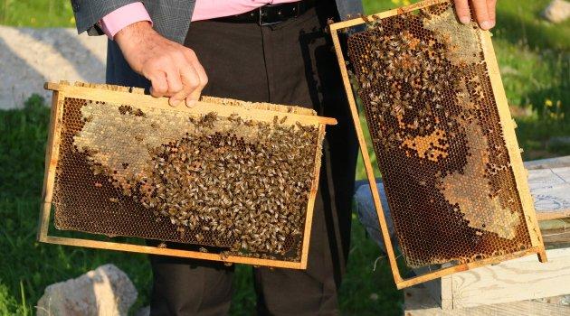 Arı ölümleri arttı