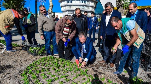 Çakır işçilerle birlikte çiçek dikti