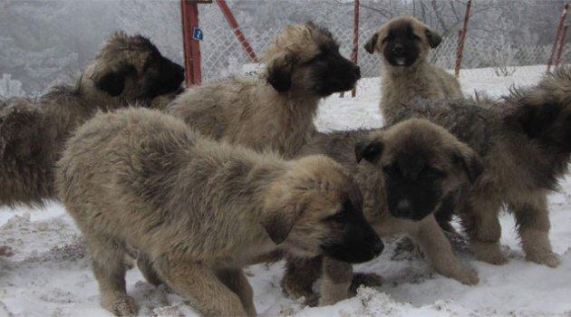 Karda köpekler birbirlerine sarılıp donarak öldüler