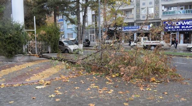 Ağaç otomobilin üzerine düştü