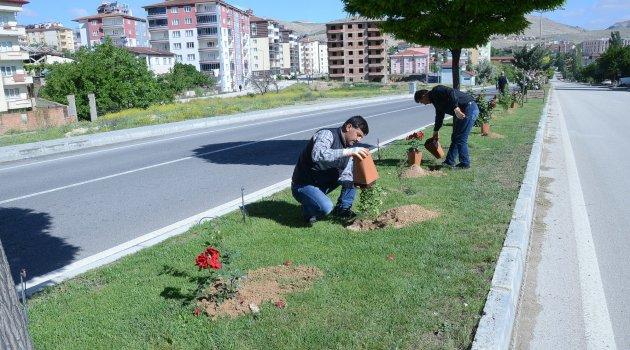 Otuz yapraklı gül şehri Darende 'gül' ile donatıldı