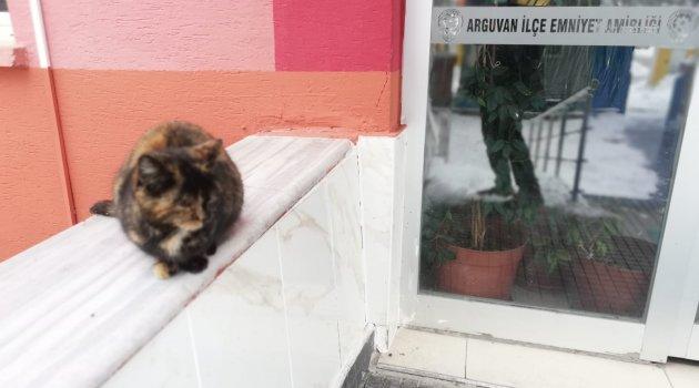 Polisten kedi şefkati