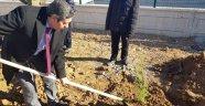 100 fidan Toprak Dede'yle aynı gün toprakla buluşturuldu