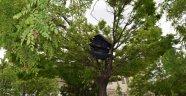 Parklara Kedi Evleri Ve Kuş Yuvaları Yerleştirildi