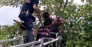 Ağaçta Mahsur Kalan Gencin İmdadına İtfaiye Yetişti