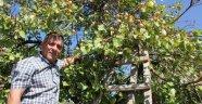 Kayısı ağacı meyve verdi