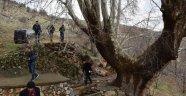 500 yıllık çınar ağacı yıllara meydan okuyor