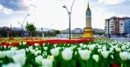 Baharın müjdecisi laleler çiçek açtı