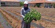 Malatya'da tarım arazisi azaldı
