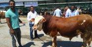 Hayvan pazarında arefe yoğunluğu