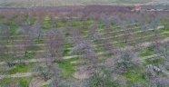 Kayısı bahçelerinde görsel şölen
