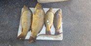Kaçak balık avına para cezası