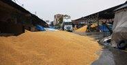 Buğday pazarında zarar büyük