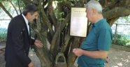 Kızılcık ağacı yıllara meydan okuyor