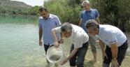Göletlere 90 bin yavru balık bırakıldı