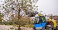 Malatya'da ağaç budama çalışmaları devam ediyor