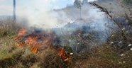 Tuzla'da otluk alanda yangın çıktı çekirgeler kaldırımı istila etti