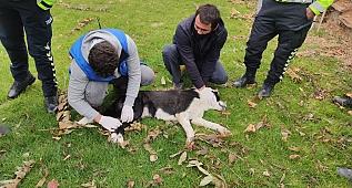 Ayağı kırılan köpeğe polis sahip çıktı!