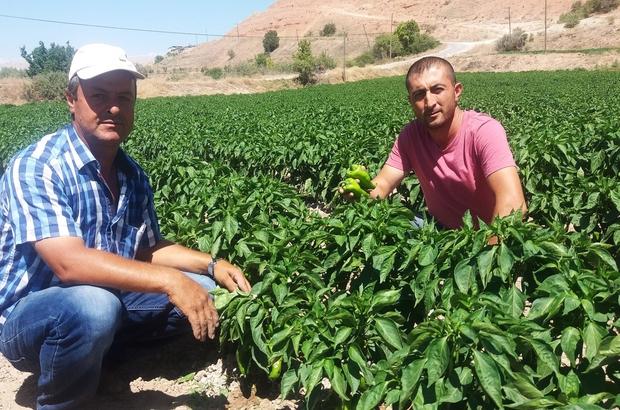 Örnek çiftçinin yetiştirdiği ürünler yok satıyor