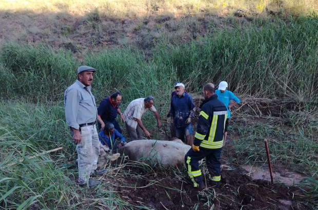 Çamura saplanan inekleri itfaiye kurtardı